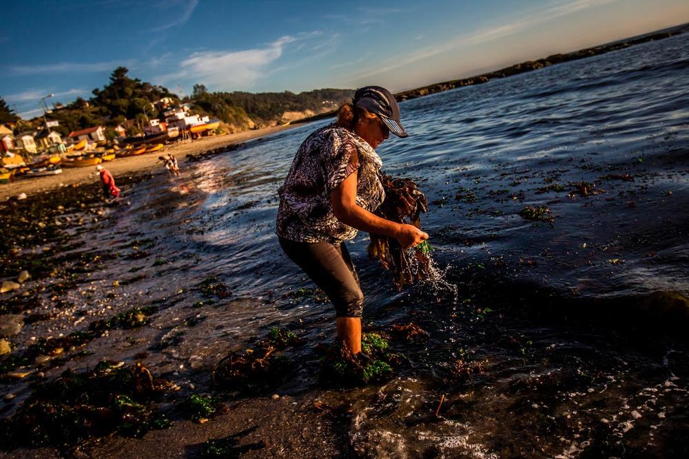 Chile: Cuota de género en la pesca artesanal ayudará a relevar el rol de las mujeres para una pesca más sustentable en el país